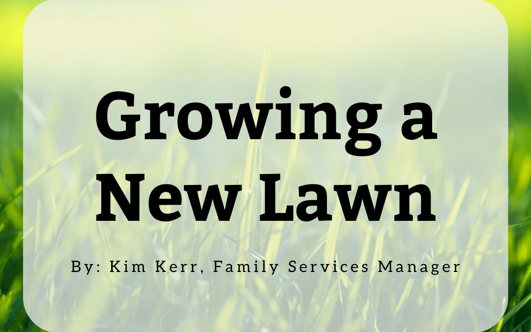 Growing a New Lawn